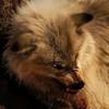 Ashley-Firecake's avatar