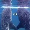 AshleySaisho's avatar
