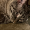 ashlie369's avatar