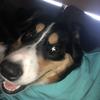 ashyelly's avatar