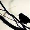 AskAlicebird's avatar