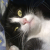 AskinGuesyy's avatar