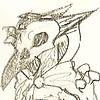 aspen--trees's avatar