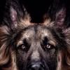 assedo84's avatar