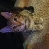 ATinyPeiceOfTrash's avatar