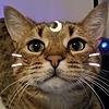 AtlasTowers's avatar
