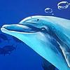 Atolm's avatar
