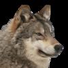 AttNew1's avatar