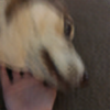 auggiecataca's avatar
