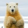Aurora-Bri's avatar