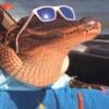 AutisticDog's avatar