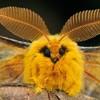 Autumn-Moth's avatar