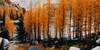 AutumnalWorld