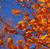 AutumnQuil's avatar