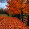 AutumnRainStorm's avatar