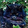 Axdwy's avatar