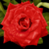 Ayamel's avatar