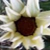 Azurett's avatar