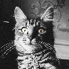 babu-shka's avatar