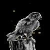 BackcountryPhotos's avatar
