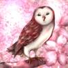 Baengpunn's avatar