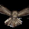 BaldoinusGattusLuxiu's avatar