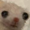 Banablahbread's avatar
