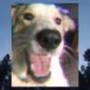 bantern's avatar
