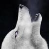 baRoguing's avatar