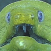 Barrel-o-TF's avatar