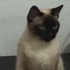 BassManX's avatar