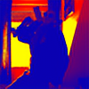 bbqjoe's avatar
