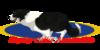 BC-Association's avatar
