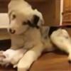 bc-breyers's avatar