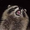 BDawgRULES's avatar