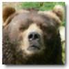 BearBonz's avatar