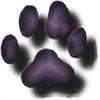 bearcatsandor's avatar