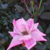 beautifulworld1121's avatar