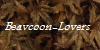 Beavcoon-Lovers