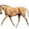 Becki-Marie's avatar