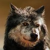 BeckoningSilence's avatar