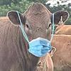 beefalo's avatar
