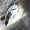 BeliesTheIris's avatar