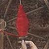 belladonna-atropa's avatar