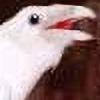 BenWolfe's avatar