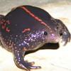 bicyclefrog's avatar