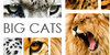 Big-cats-in-Frame's avatar