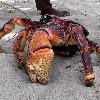 BigCoconutCrab's avatar