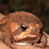 bigfroggy12's avatar