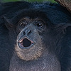 BigUngaMonke's avatar